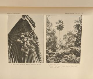 Memoirs of the Bernice Pauahi Bishop Museum of Polynesian Ethnology and Natural History, Vol. 8